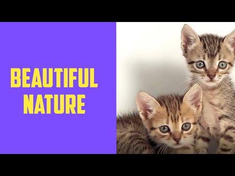 Beautiful Nature  - Relaxing 2020