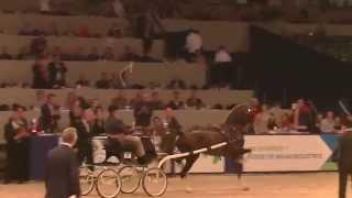 Oregon Trophy 2015 Dutch Harness Horse Fine Harness Championship