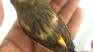 افضل دواء تتخلص منه من الفاش والطفيليات عند الطيور