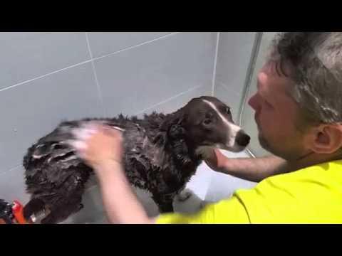 Как мы мыли собаку, которая не любит мыться