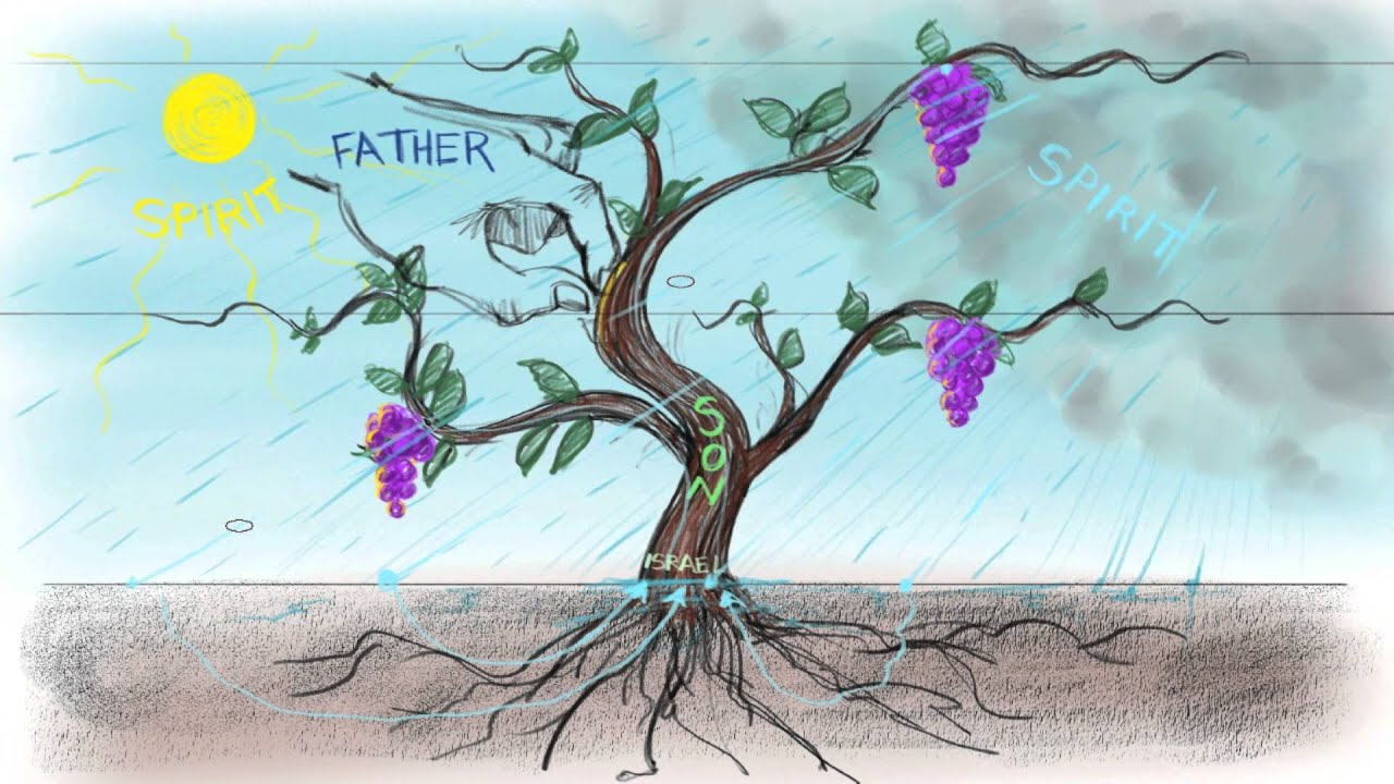The Vine and the Branches | John 15:1-15 - YouTube