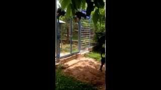 Dogs farm Phu Quoc Island Vietnam