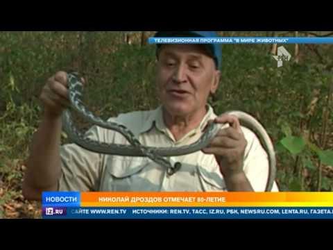 У главного телезоолога России Николая Дроздова юбилей