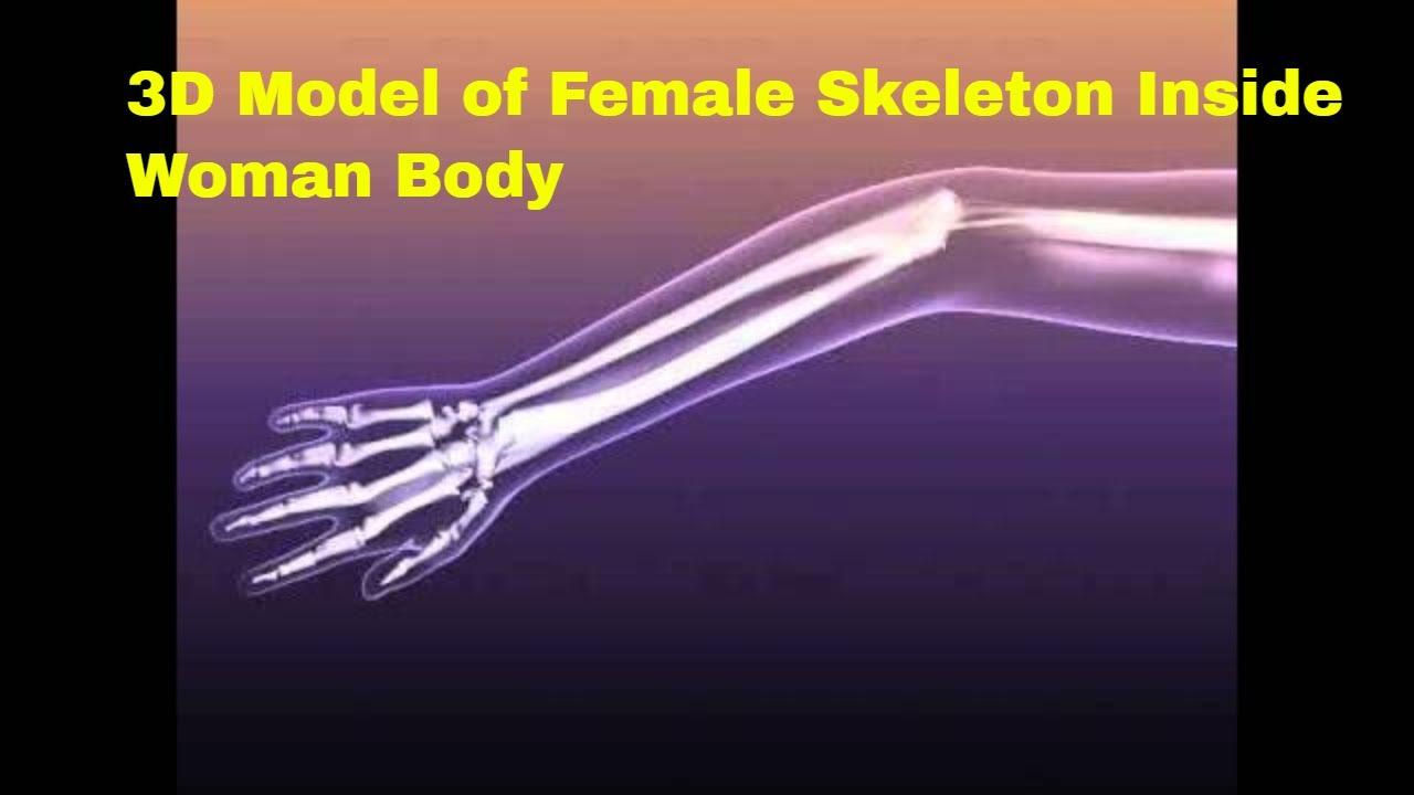 3d Model Of Female Skeleton Inside Woman Body Review Youtube