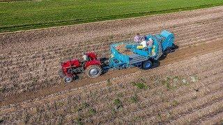 Kopanie Ziemniaków 2017 II MF255 & ANNA II DJI Phantom 4 II Potato Peeling 2017