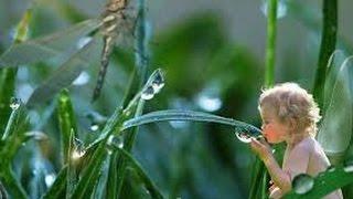 Саморазвитие экосистемы. Урок биологии.