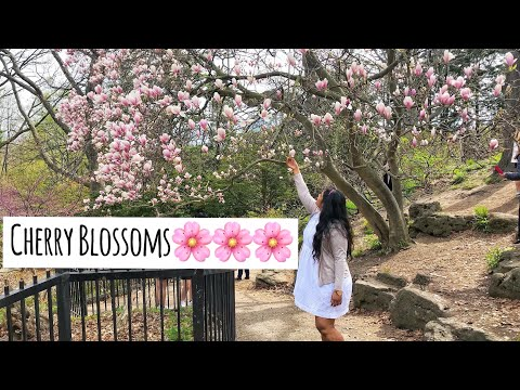 #AIEVlogs : Isn't CANADA beautiful? | Cherry Blossoms at High Park