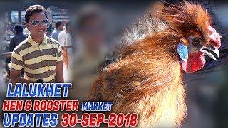 Lalukhet Birds & Hen Rooster Market 30-9-2018 Latest Updates (Jamshed Asmi Informative Channel)