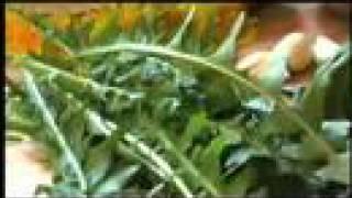 Stalking Wild Greens: Dandelion