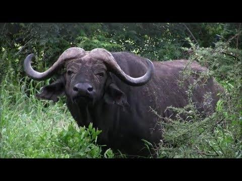 Safari in Kenya National Park Tsavo East & Tsavo West!