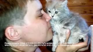 Коллекция разных котят | Возьмите друга в приюте | Подарите дом бездомным