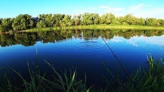 Рыбалка летом на поплавок и донку УВИДЕЛ БЕДУ ПОСЛЕ РЫБАЛКИ