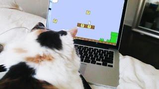 MI GATA JUGANDO CAT MARIO - Paisley