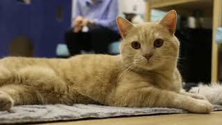 Один в Томске: котокафе Cat space