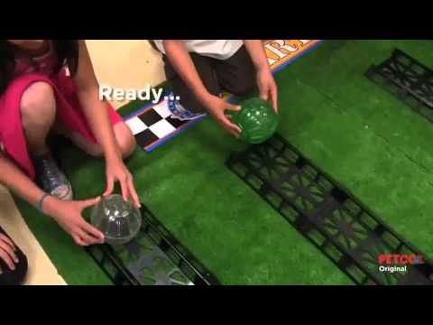 hamster ball derby petco youtube