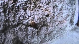 Cierre de panal de una colmena de abeja Trigona