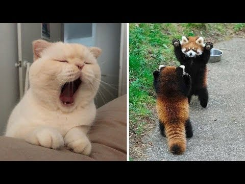Cutest Baby Animals Videos Compilation Funny Moment of the Animals - Cutest Animals #3
