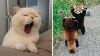 Cutest Baby Animals Videos Compilation Funny Moment of the Animals  Cutest Animals #3
