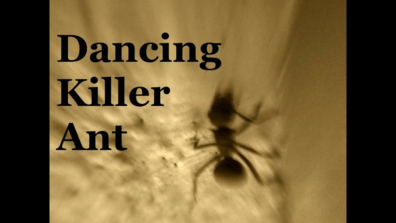 20 Dancing Ants Pictures And Ideas On Stem Education Caucus
