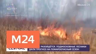 Смотреть видео Подмосковные лесники дали прогноз на пожароопасный сезон - Москва 24 онлайн