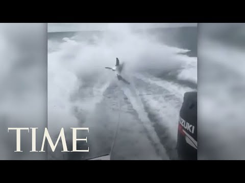 Florida Officials Investigate 'Disturbing' Video Of Shark Being Dragged By A Speed Boat | TIME