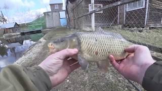 Рыбалка Весной 2020 РЫБНАЯ ДАМБА Поймал БОЧКУ КАРПА на УДОЧКУ в НЕРЕСТОВЫЙ ЗАПРЕТ