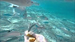 Кормление рыб под водой. Захватывающее видео