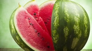 видео Агротехника бахчевых кормовых культур