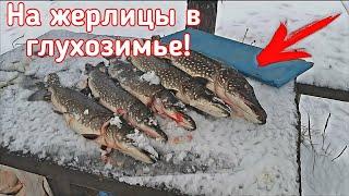 Рыбалка на ЖЕРЛИЦЫ в глухозимье Поиск заветного зимнего ТРОФЕЯ продолжается