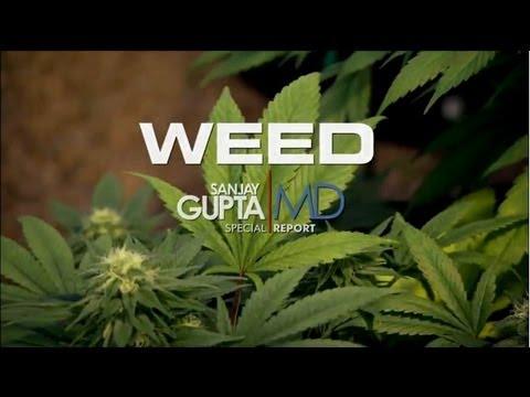 """Film dokumentalny """"CHWAST"""" [HD] - dr Sanjay Gupta CNN - napisy PL"""