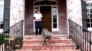 Nashville Dog Training | K-9 Development
