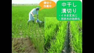 新潟県農業大学校産コシヒカリを初めて商品開発した「旨米」。新潟デザ...