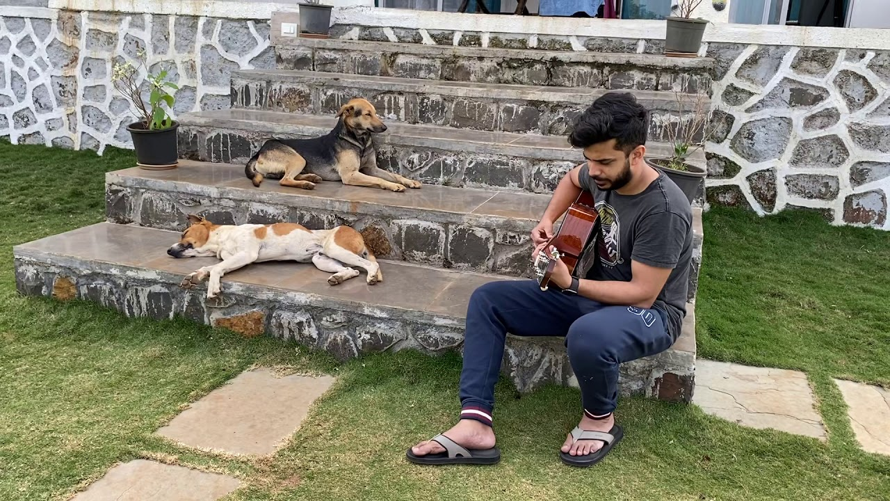 Musical jam for loving dogs in the farm by Soumyadeep