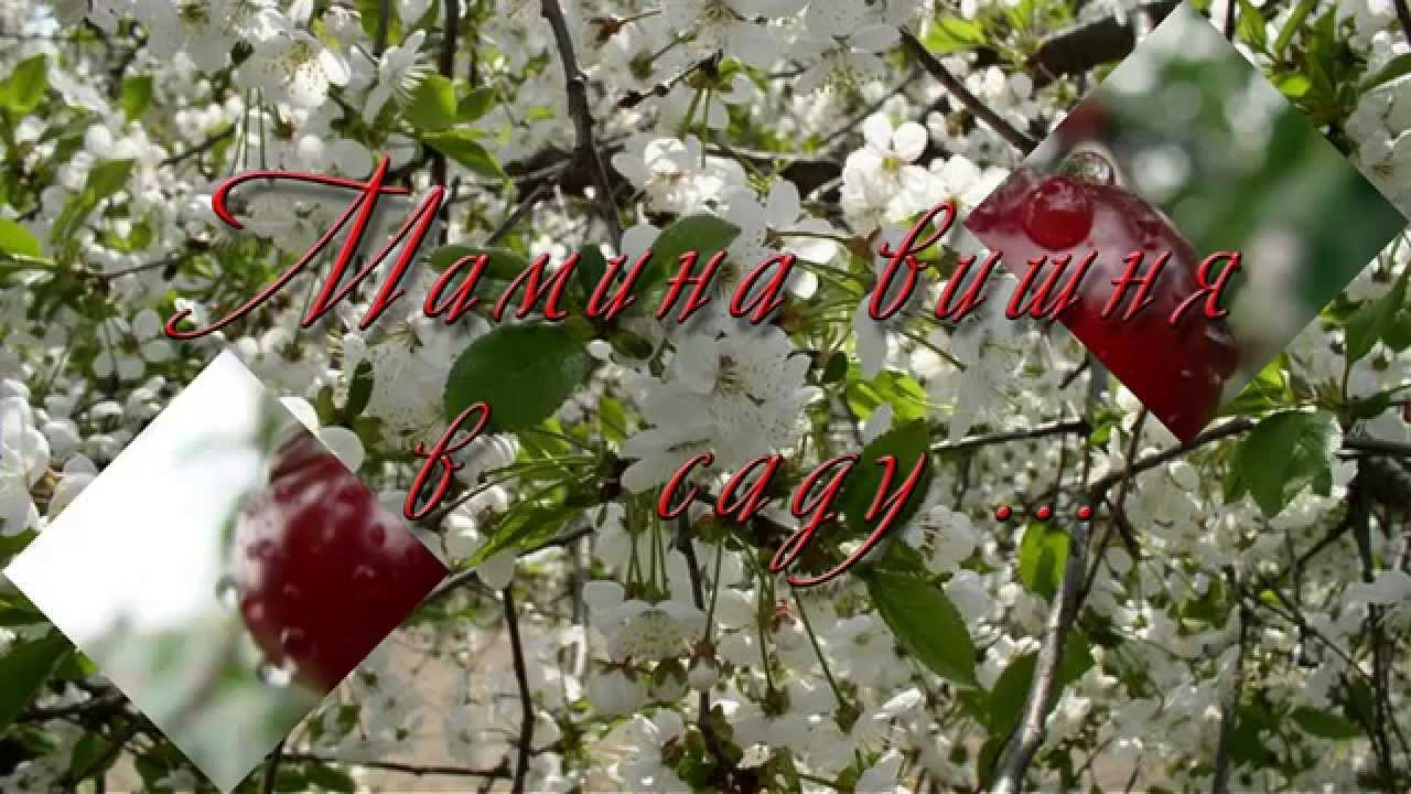 Мамина вишня в саду слушать