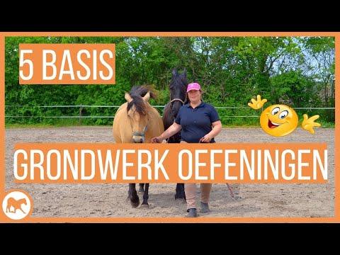 5 basis grondwerk oefeningen die ieder paard moet kennen!
