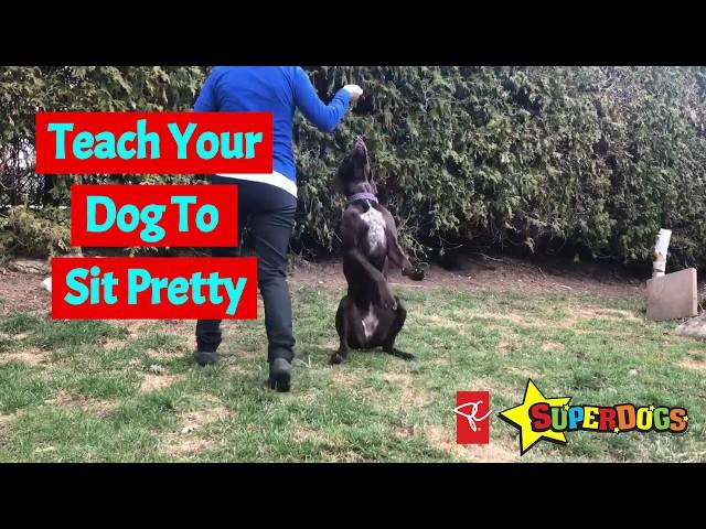 Teach Your Dog To Sit Pretty   Dog Training