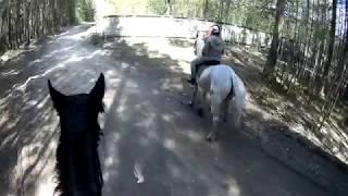 Катание на лошадях ( часть 1)