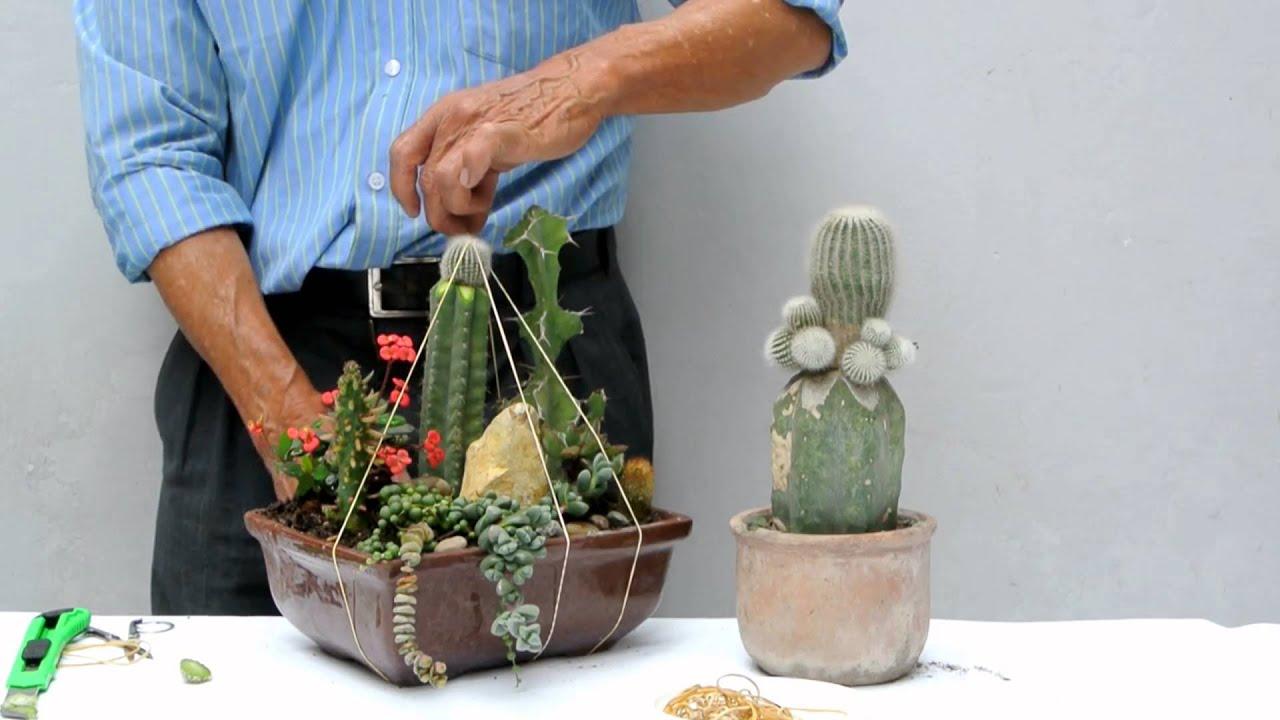 Injerto en arreglo de cactus youtube for Arreglos de jardines con macetas