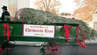 the first lady receives the 2012 white house christmas tree