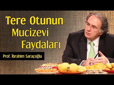 Tere Otunun Mucizevi Faydaları   Prof. İbrahim Saraçoğlu