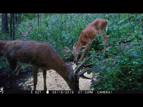 How To Make The World's Best Homemade Deer Attractant Feed Mineral