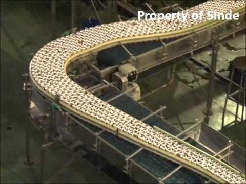 Sinde Budi Sentosa Indonesia Pharmacy Manufacturer  Can Machine Cooling Tunnel.wmv
