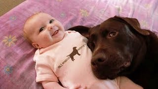 Cute is Not Enough - Funny Cats and Dogs Compilation #203