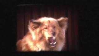 Mixed Breed Dogs 1974 - Sekarotuiset koirat Demon ja Zeo