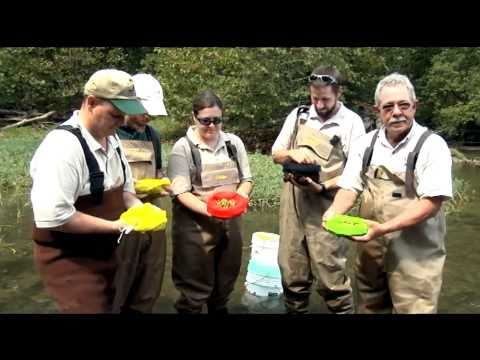 Endangered Mussels Released Into The Clinch River, Largest Release In Eastern US