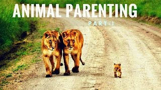 Cute Pictures of Animal Parents and Babies | Animal Parenting Part 1 | Animal Parental Care