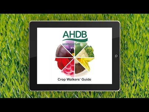 AHDB Horticulture Crop Walkers' Guide App