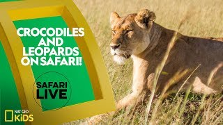 See Animals in Africa LIVE! | Safari Live