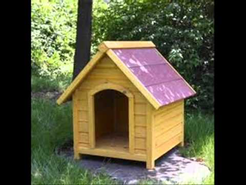 Dog House Youtube