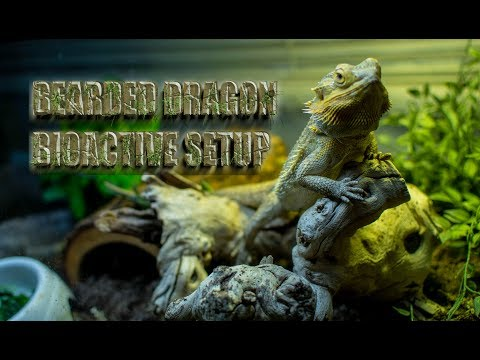 PROPERLY Set Up a Desert BIOACTIVE for your BEARDED DRAGON